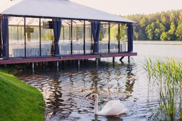 Cygnes sur le lac contre la terrasse