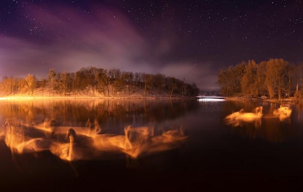 Cygnes sur le lac. longue exposition. panorama. hiver
