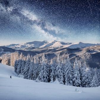 Dairy star trek dans les bois d'hiver. scène dramatique et pittoresque. carpates, ukraine, europe.