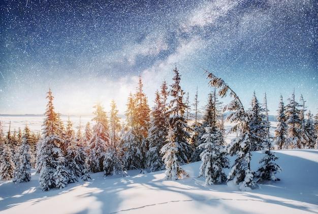 Dairy star trek dans les bois d'hiver.