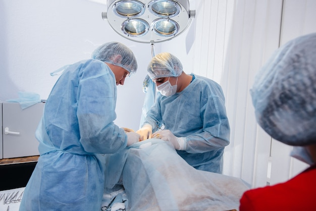 Dans une clinique vétérinaire moderne, une opération est effectuée pour sauver la vie d'un gros chien. chirurgie et médecine.