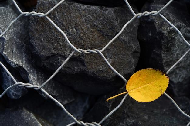 Dans le contexte des pierres grises avec un treillis se trouve une feuille jaune d'un arbre