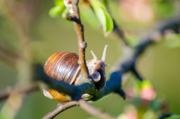 Dans une ferme, des escargots rampent le long des arbres fruitiers.