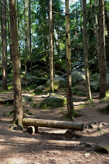 Dans la forêt sur fond d'arbres se dresse un banc fait à la main en rondins illuminés par le soleil