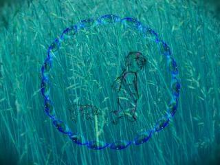Dans l'herbe à la recherche