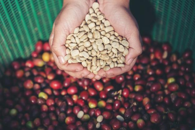 Dans les mains qui portent des grains de café