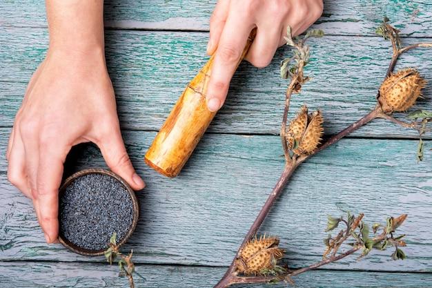 Datura plant dans la médecine traditionnelle