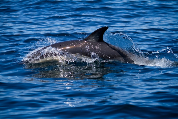Dauphins sauvages