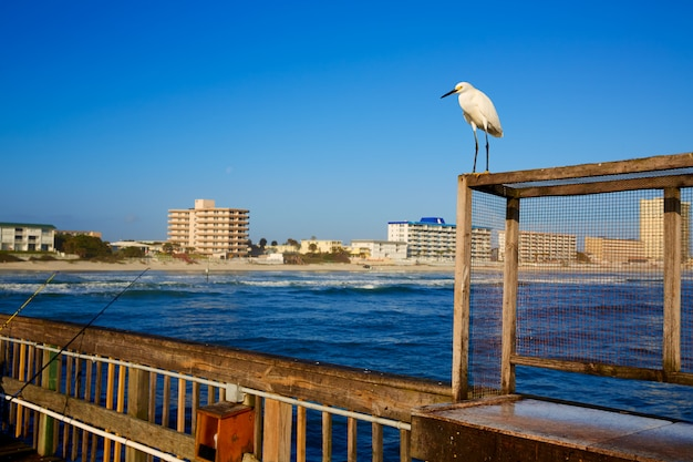Daytona beach, en floride, depuis la jetée américaine