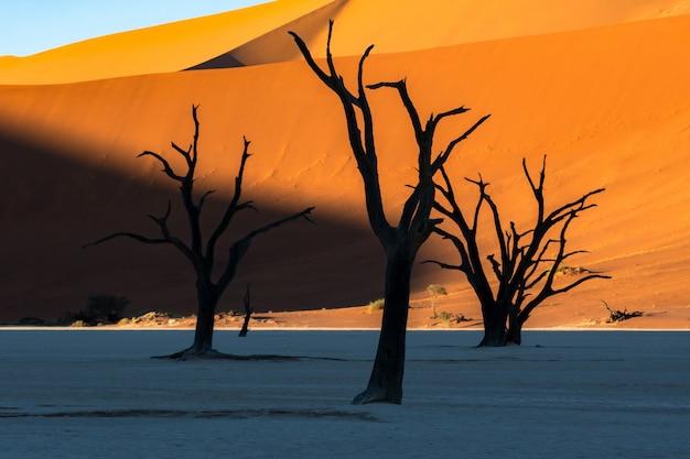 Deadvlei dans le parc national de namib-naukluft sossusvlei en namibie - camelthorn morts contre les dunes de sable orange avec un ciel bleu.