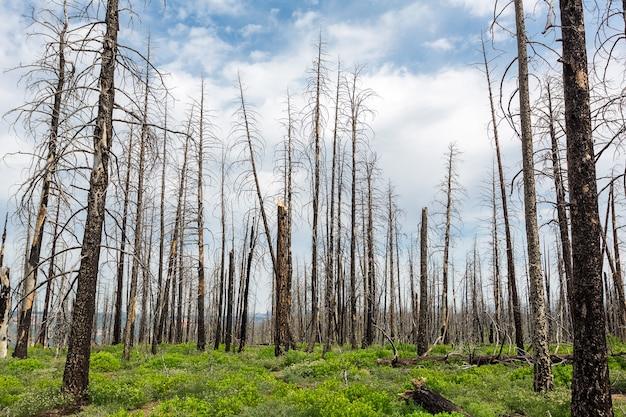 Deadwood, paysage de l'environnement écologique.