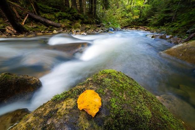 Débit rapide à travers le ruisseau de la rivière de la forêt de montagne vert sauvage avec une eau cristalline et des feuilles jaune vif sur de gros rochers humides. beau paysage animalier.