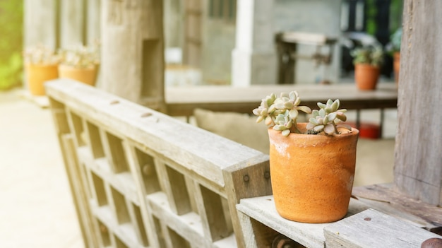 Decking et plante avec petite décoration de jardin.