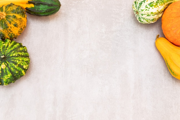 Décor d'automne festif de citrouilles sur fond de béton gris composition d'automne à plat