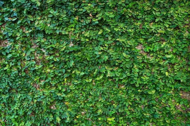Le décor de la cour. moulin envahi de plantes vertes