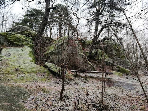 Décor d'une forêt verte à larvik, norvège