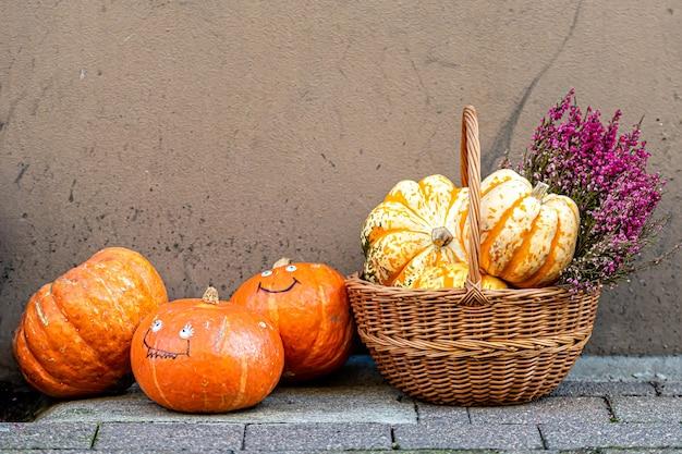 Décor d'halloween avec diverses citrouilles et fleurs, récolte d'automne, cueillette ou récolte