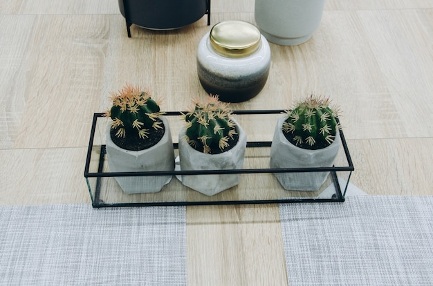 Décor à la maison avec cactus