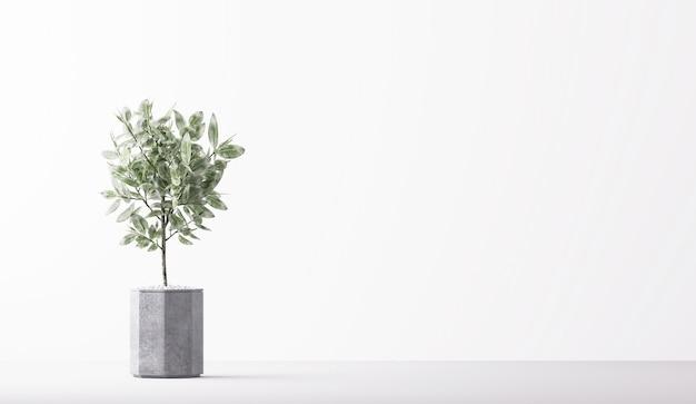 Décor à la maison de plante d'intérieur minimal isolé