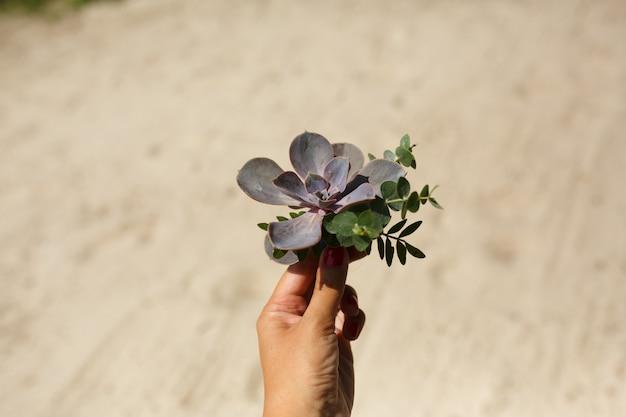 Décorateur de fleuriste tient une fleur succulente dans la main