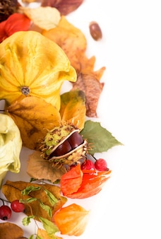 Décoration d'automne arrangée avec des feuilles sèches, des citrouilles et plus, isolé sur blanc, grand format