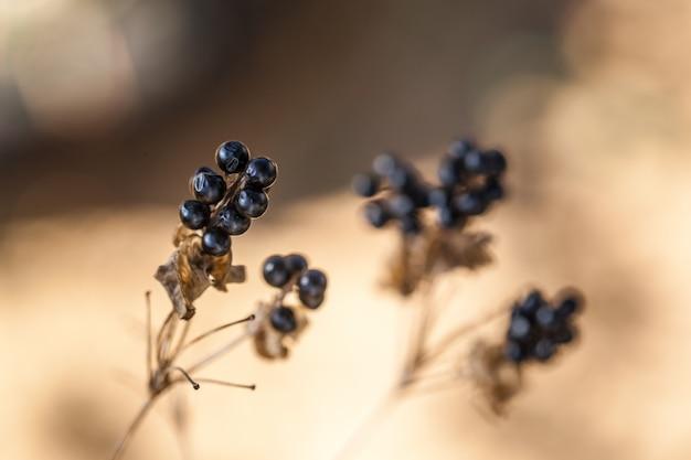 Décoration d'automne avec plante séchée