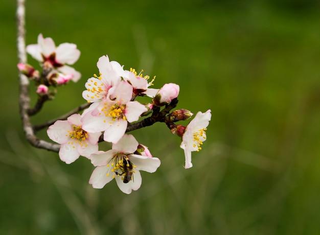 Décoration de belle branche avec des fleurs