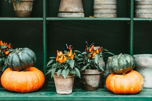 Décoration extérieure halloween halloween avec des citrouilles