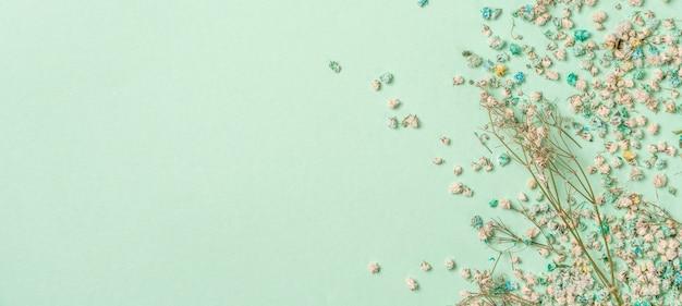 Décoration avec des fleurs de gypsophile avec espace copie sur fond vert clair à plat