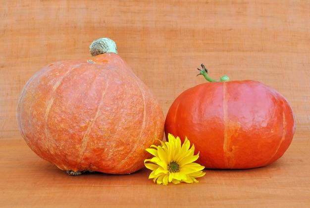 Décoration sur fond orange avec des citrouilles et une fleur de marguerite