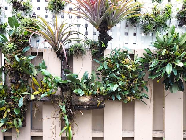 Décoration de jardin verticale sur le mur