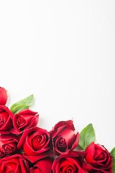 Décoration de rose au fond d'un fond blanc