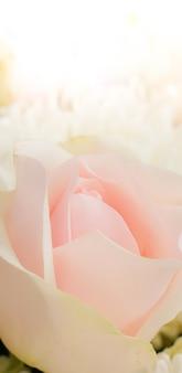 Décoration de surprise de mariage de plantes