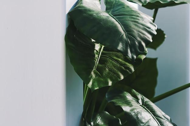Décoration végétale de feuilles vertes dans un intérieur blanc moderne