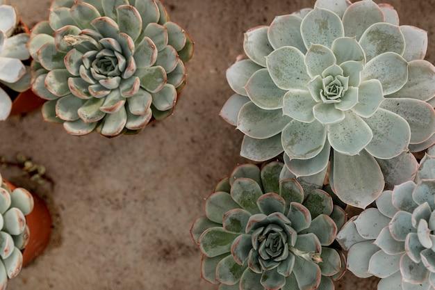 Décoration vue de dessus avec de belles fleurs