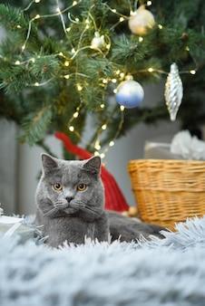 Décorations mignonnes de chat british shorthair gris gris