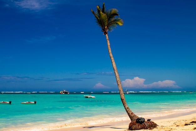 Découvre à la plage tropicale à la mer des caraïbes