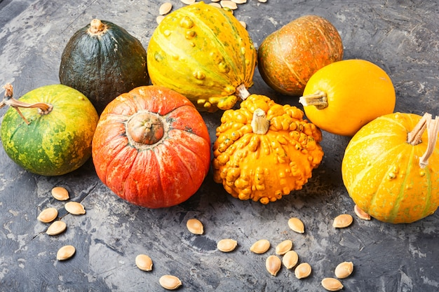 Définir les citrouilles d'automne