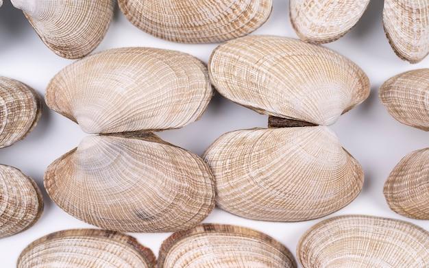 Définir des coquillages isolés sur fond blanc fond blanc avec une texture de coquillages pour le fond