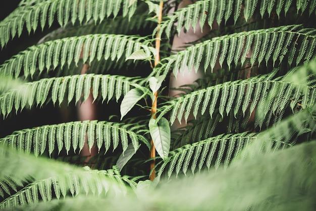 La déforestation à bornéo les orangs-outans disparaissent dans les jungles de malaisie et d'indonésie