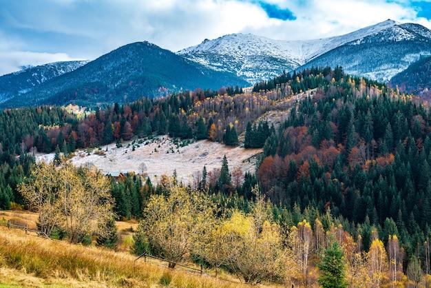 Déforestation dans les forêts des carpates dans un merveilleux automne chaud