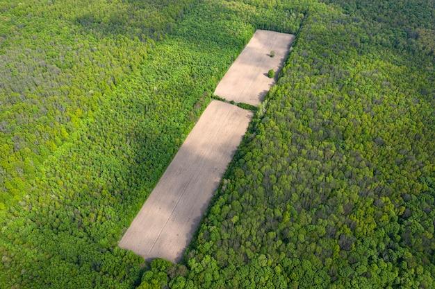 Déforestation à l'intérieur d'une grande forêt