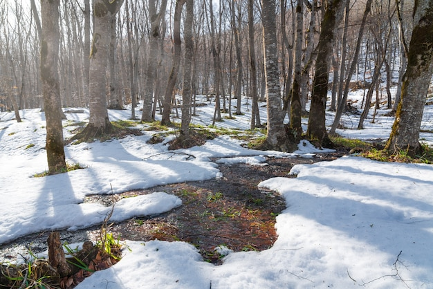 Dégel printanier en forêt