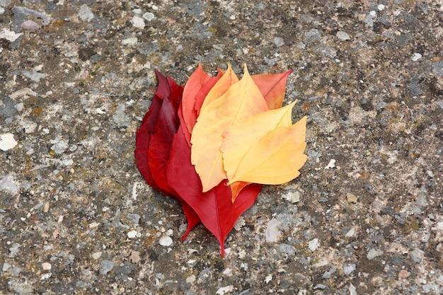 Dégradé de tons de feuilles d'automne