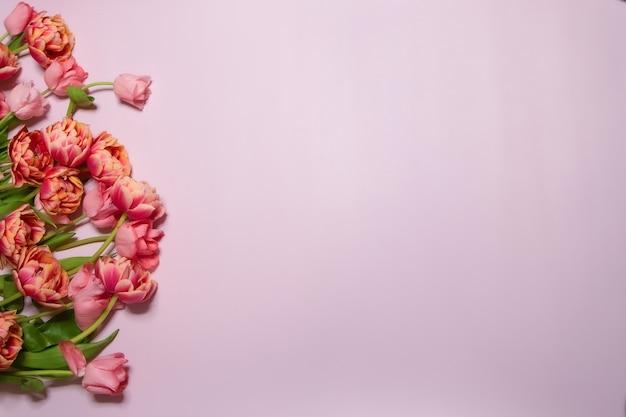 Délicates tulipes jaunes fond rose