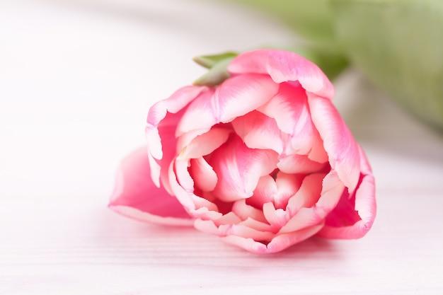 Délicates tulipes roses sur un bois blanc