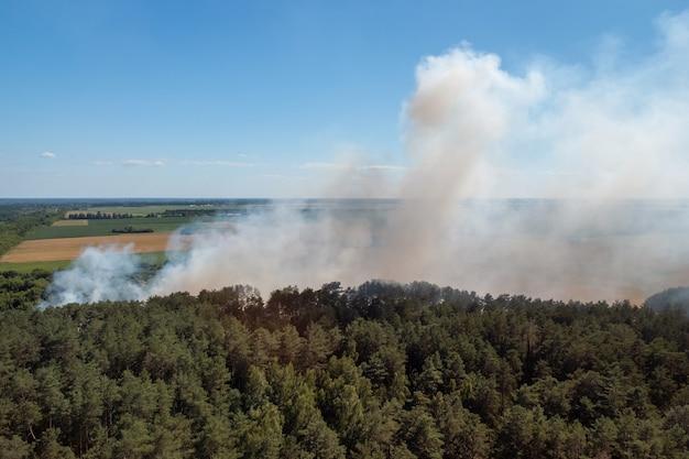 Démarrage d'un feu de forêt. énorme quantité de fumée sur la forêt de pins à la campagne