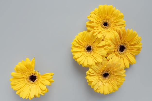 Démonstration de couleurs à la mode 2021 - gris et jaune. belles fleurs de gerbera sur fond gris avec espace de copie.