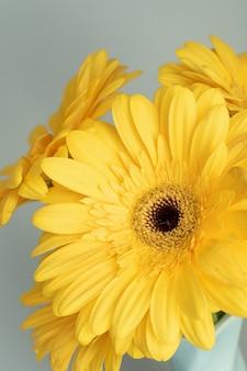 Démonstration de couleurs à la mode 2021 - gris et jaune. belles fleurs de gerbera sur fond gris.