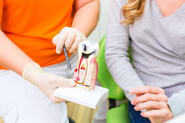 Dentiste expliquant la thérapie du patient sur une dent modèle